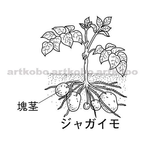 Web教材イラスト図版工房 / R_Bi_生殖_15